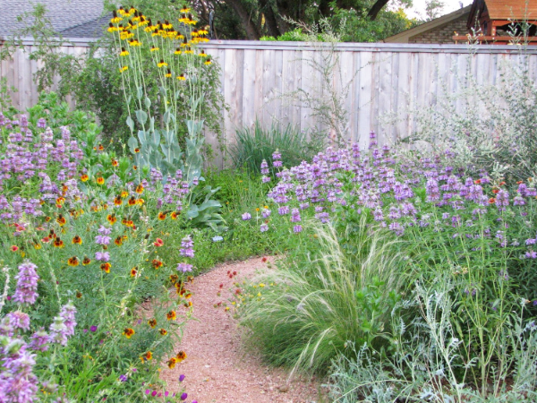 NATIVE PLANTS GARDEN BACKYARD PLANO
