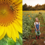 You Can Take Your Photos In This Sea Of Sunflowers In North Texas
