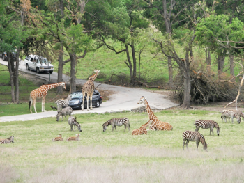 fossil rim wildlife center drive through savannah