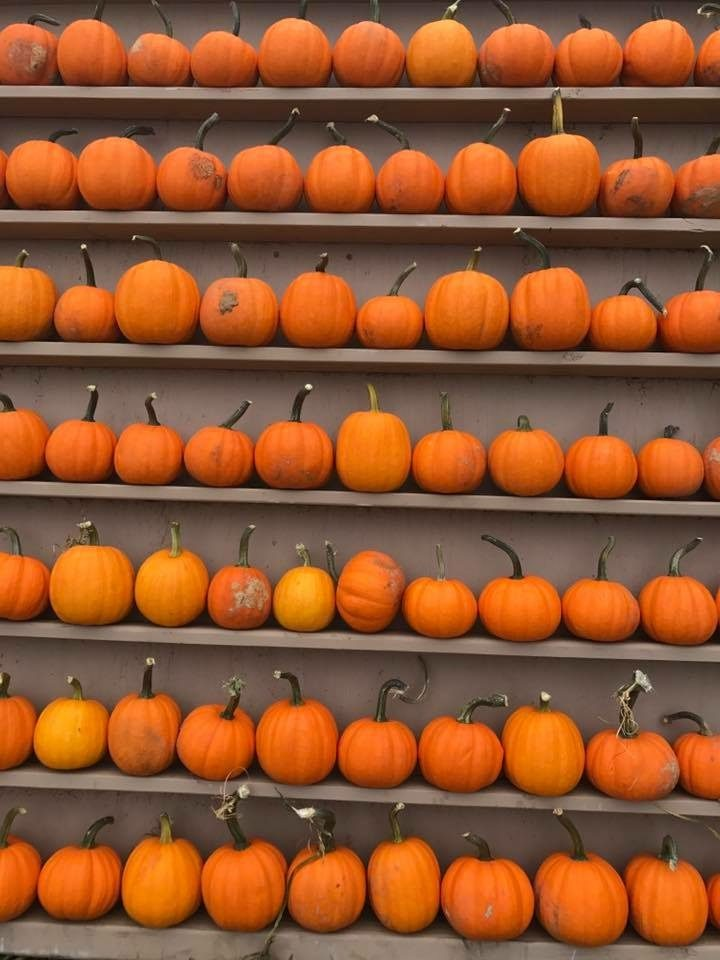 dfw pumpkin patches