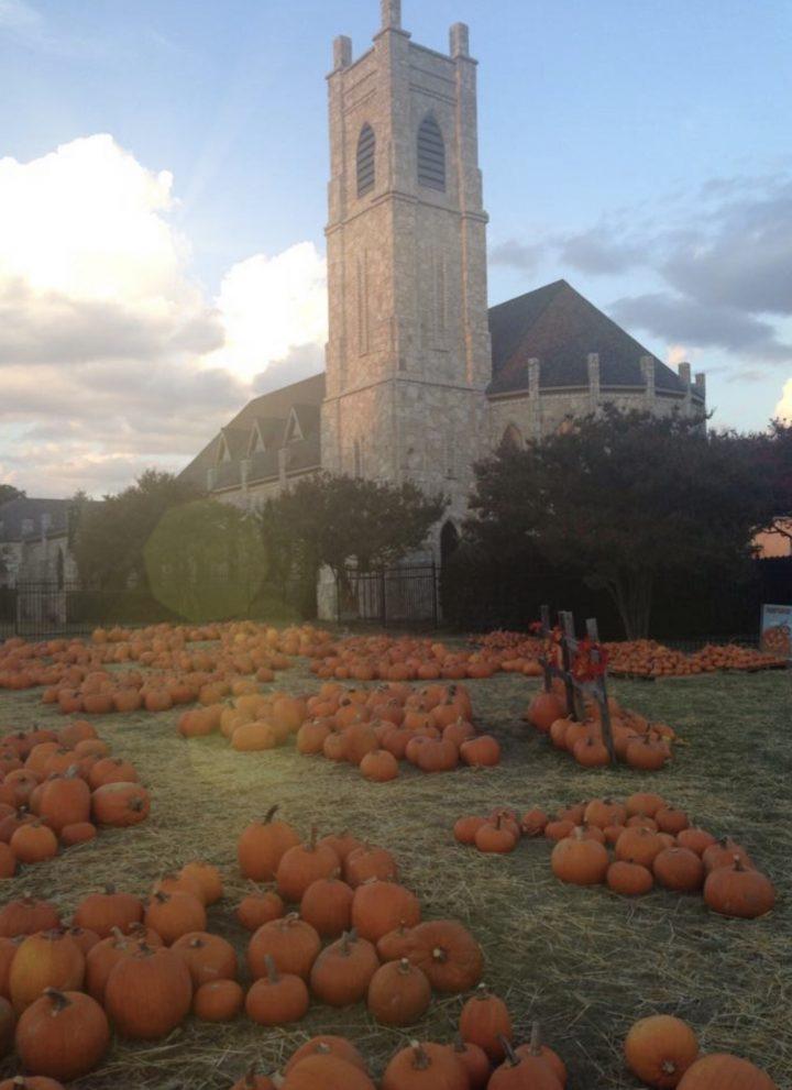 pumpkin patches in dfw