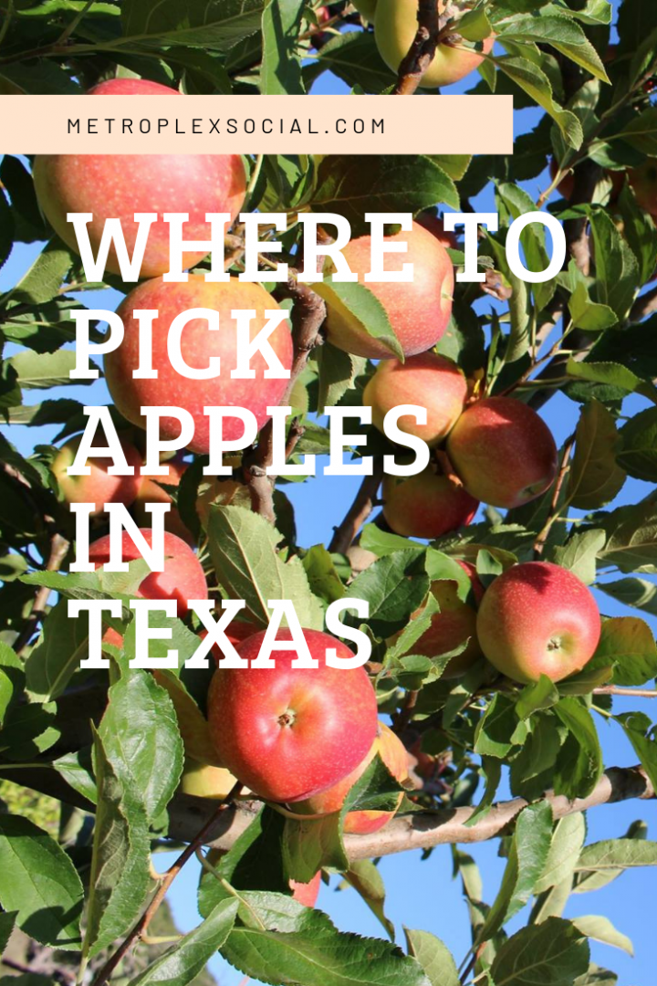 apple picking in texas