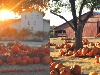 pumpkin patches in dfw