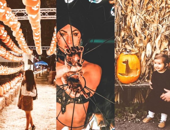 pumpkin nights fest dallas
