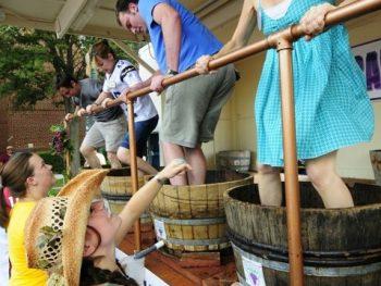 Grapevine wine festival