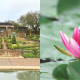 fort-worth-botanic-japanese-garden-reopening-need-to-know (2)